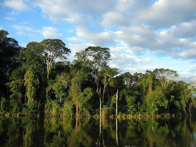 """Atlantischer Regenwald"" in Paraguay (Foto: Ilosuna, Wikipedia)"
