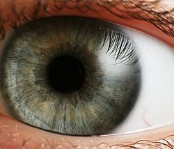 Menschliches Auge (Foto: Petr Novák, Wikipedia)
