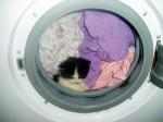 Warum wir die Katze nicht in die Waschmaschine stecken dürfen