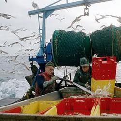 Ein immer seltenerer Anblick: Fischer auf einem kleinen Fischerboot an der französischen Atlantikküste (Foto: Szene aus We Feed the World)