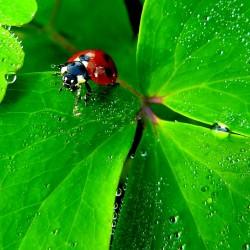 Glück (Bild: cocoparisienne, Pixabay)