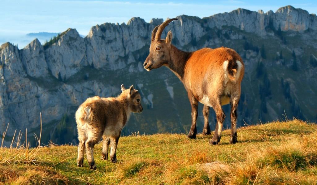 Schweiz (Bild: Ben039, Pixabay)