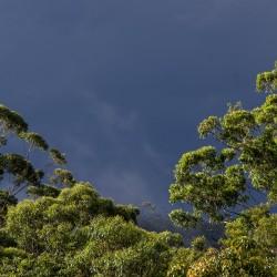 Regenwald (Bild: sandid, Pixabay)