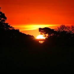 Amazonas (Bild: leondeniscf, Pixabay)