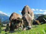 Klimasteuer auf Fleisch